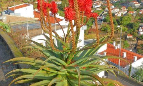 Madeira-Rundreise: 2 Zusatztermine im November